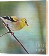 Goldfinch With Rosy Shoulder - Digital Paint IIi Wood Print