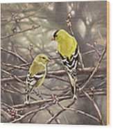 Goldfinches In The Rain Wood Print