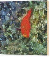 Goldfish Photo Art 05 Wood Print