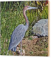 Goliath Heron By Water Wood Print