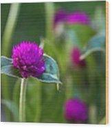 Gomphrena Flowers Wood Print