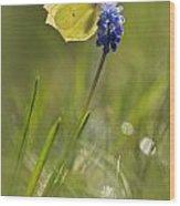 Gonepteryx Rhamni On The Blue Flower Wood Print