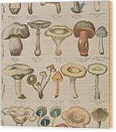 Good And Bad Mushrooms Wood Print