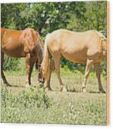 Marble Falls Texas In Good Grass Wood Print