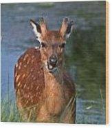 Good Grass Wood Print