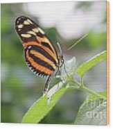 Good Morning Butterfly Wood Print