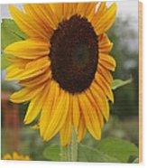 Good Morning Sunshine - Sunflower Wood Print