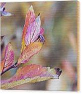 Goodbye To Autumn Wood Print