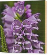 Obedient Plant Wood Print