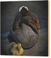 Goose And Gosling Wood Print