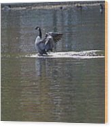 Goose Cleaning Wood Print