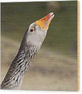Goose Gander Wood Print by Paula Rountree Bischoff