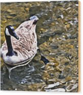 Goose In The Water Wood Print