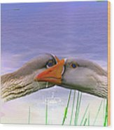 Goose Kiss - Featured In Comfortable Art - Nature Wildlife - Wildlife Groups Wood Print