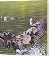 Goose Landing II Wood Print