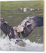 Goose Landing Iv Wood Print