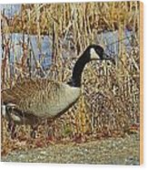 Goose On The Edge Wood Print