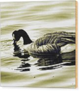 Goose Reflecting In The Water Wood Print
