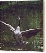 Goose Shaking Its Wings. Wood Print