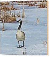 Goose Standing Wood Print