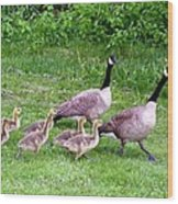Goose Step Wood Print by Will Borden