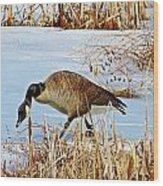 Goose Walking Wood Print