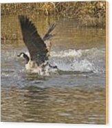 Goose Water Landing Wood Print