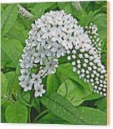 Gooseneck Flower Wood Print by Aimee L Maher Photography and Art Visit ALMGallerydotcom