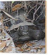 Gopher Tortoise Wood Print