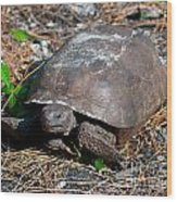 Gopher Turtle Wood Print
