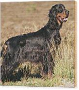 Gordon Setter Dog Wood Print
