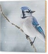 Gorgeous Blue Jay In The Snow Wood Print