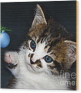 Gorgeous Christmas Kitten Wood Print
