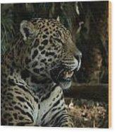 Gorgeous Jaguar Wood Print