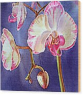 Gorgeous Orchid Wood Print