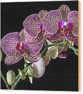 Gorgeous Orchids Wood Print