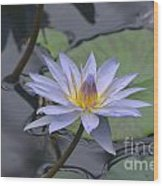 Gorgeous Pale Lavender Water Lily Wood Print