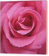 Gorgeous Pink Rose Wood Print
