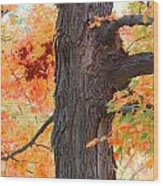 Gorgeous Tree Wood Print