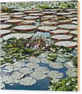 Gorgeous Water Lilies Wood Print