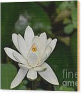 Gorgeous White Lotus Flower Blossom Wood Print