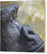 Gorilla Contemplating Wood Print