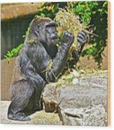 Gorilla Eats Wood Print