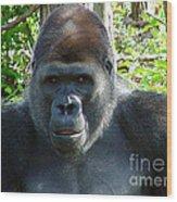 Gorilla Headshot Wood Print