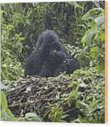 Gorilla In Our Midst Wood Print