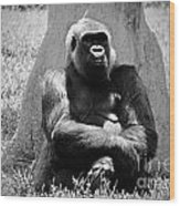Gorilla In Solitude Wood Print
