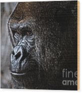 Gorilla In Thought Wood Print