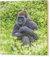 Gorilla Resting Wood Print