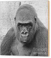 Gorilla White Background Wood Print