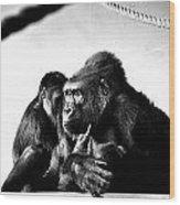 Gorillas Wood Print